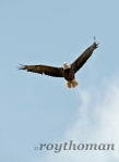 I saw this eagle sitting on a power line tower. The eagle stared at me through the steel bars of the tower for a long time before it flew.