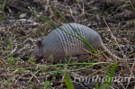 I saw some not so cute and fuzzy critters. But don't tell the armadillo that it isn't cute.