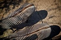 Brevard Zoo_03-07-2020_005